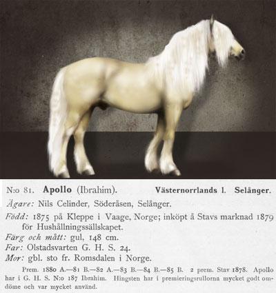 Apollo-N.81