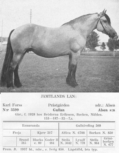 Gullan-3599-stam-bild