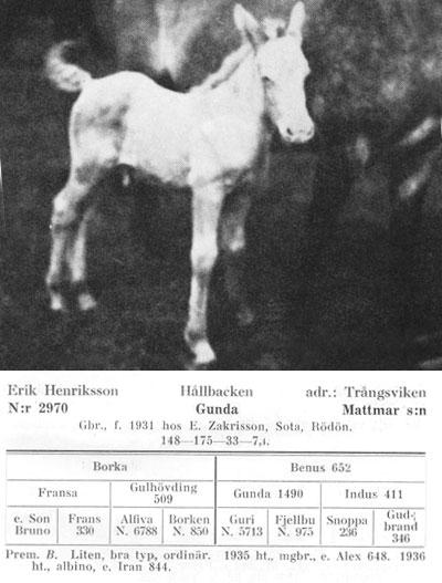 Gunda-N.2970