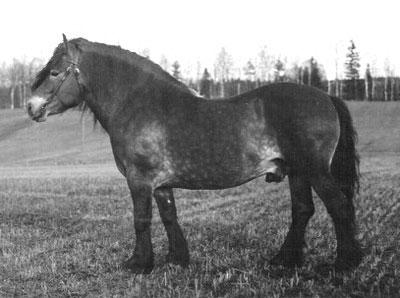 Hejer-695