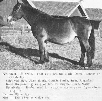 Hjordis-D.7604-stam-bild