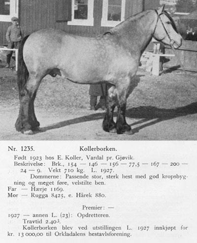 Kollerborken-1235-stam-bild