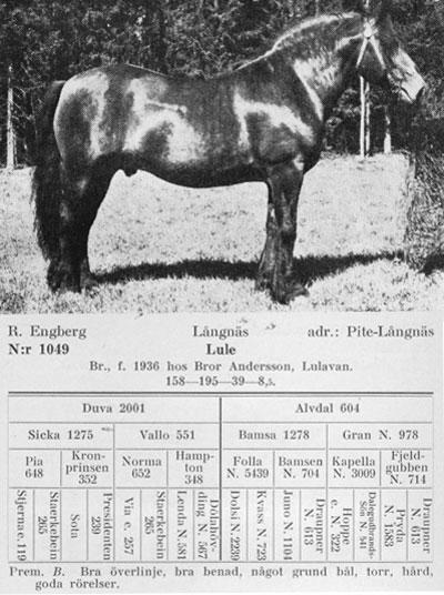 Lule-1949-stam
