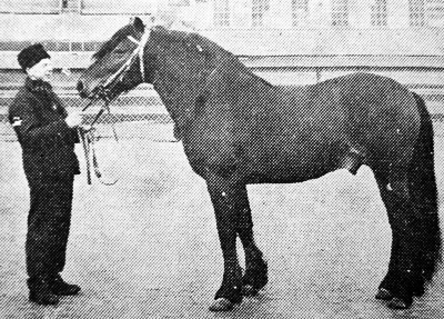 Skarphedin-T.267