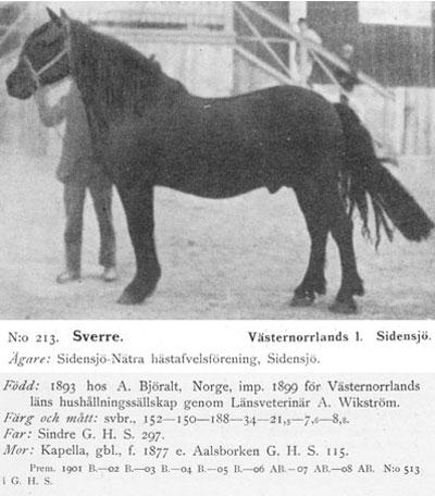 Sverre213-stam