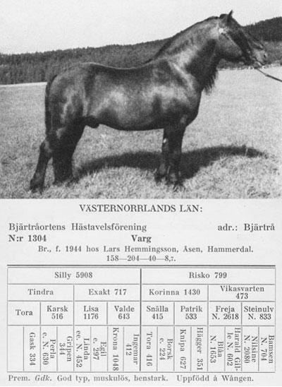 Varg-1304-stam