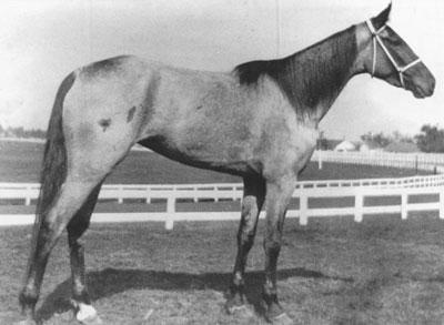 Nelly Jay f. 1899 E: Jay Hawker-Jay Bird. Kentucky Futurity 1902